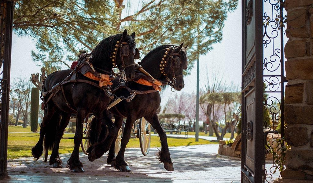 paseo-caballos_03